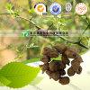 100%の純粋で自然なハーブの薬Tenodera Aridifolia Stoll