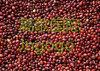 Еды урожая экспорта фасоль Qiality новой высокая хорошая красная