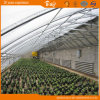 Wijd Gebruikt Zonne Groen Huis voor het Plantaardige Planten
