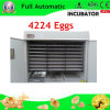 Automatic lleno Industrial Thermostat para Egg Incubator