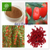 Het Uittreksel van Goji, Uittreksel Wolfberry; Het Uittreksel van de Bes van Goji; Het Uittreksel van het Fruit van Wolfberry; Barbury Wolfberry Fruit P.E.