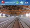 Cage de poulet du Nigéria pour la ferme de poule (4L120)