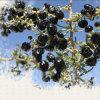 Nespola 2016 Wolfberry nero secco organico fresco