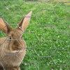 Reticolato del coniglio di alta qualità 31mm del fornitore della Cina (RB31)