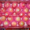 Neues Qinguan Apple Rot Apple