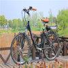 여자 26  36V 250W Ebike 도시 도로 전기 자전거 자전거