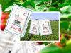 Fertilizzante solubile in acqua ad alto tenore di fosforo del fertilizzante NPK13-40-13