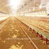 現代農場のための自動養鶏場装置