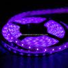 Luce di striscia del LED con la luce del nastro di porpora 3528 LED