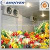 Armazenamento frio personalizado para frutas e verdura