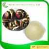 Tee-Saponin-Puder der Qualitäts-50% 60% 95%