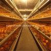Systeem het van uitstekende kwaliteit van de Kooi voor het Huis van de Landbouw van het Gevogelte