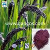 Extrait noir normal de riz de l'anthocyanine 20%~50% de 100%