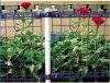 최신 판매 정원 두 배 루프에 의하여 용접되는 철망사 담