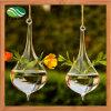 Vaso di vetro d'attaccatura del Terrarium di vetro saltato dei mestieri