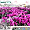 Quadratischer Typ Ventilations-Kühlventilator für Blumen Gewächshäuser pflanzend