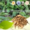 Raíz natural pura de Pseudostellariae de la raíz del extracto