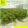 꽃/식물성 바람 증거 Hydroponic 온실