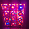 La migliore PANNOCCHIA LED coltiva l'indicatore luminoso che uno spettro completo LED di 800 watt coltiva gli indicatori luminosi della pianta con Growing di fiore per crescente Weed dell'interno