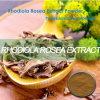 La polvere grezza Rhodiola Rosea per aumenta l'immunità