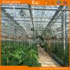 De duurzame Serre van het Glas voor het Planten van Komkommer/Tomaten