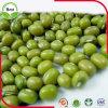 Chinese 2016 polierte kleine grüne Bohnen 3-4mm