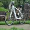 Heißes Batterie-Bewegungselektrisches Fahrrad der Verkaufs-Qualitäts350w 36V 13ah