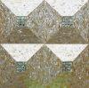 黄色いリップのモップのシェルおよびアワビのシェルの不規則な三角形のモザイク
