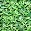 Hierba plástica protegida ULTRAVIOLETA para la decoración del jardín
