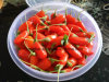 Baga secada orgânica de Goji da nêspera de Ningxia (Wolfberry)