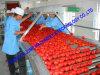 Typische Tomatenkonzentrat-aufbereitende Zeile