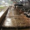 Siemens Control System Manure Scraper per Dairy Cow Farm, Manure Cleaning Machine