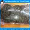 Larva de farinha secada do alimento de pássaro