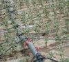 Аграрный круглый шланг полива потека PVC излучателя