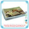 Impresión del libro del folleto del compartimiento de la laminación de Matt de la impresión del catálogo de la compañía