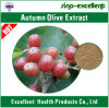 Extrato verde-oliva do outono (umbellata do Elaeagnus)