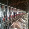 Автоматическое оборудование свиньи для проекта фермы свиньи (JCJX-220)