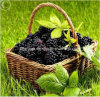 Qualitäts-handgemachte quadratische Form kundenspezifischer Weide-Frucht-Korb
