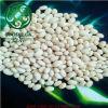 Feijões-roxos de branco chinês