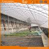Chambre verte solaire pour l'élevage de fraise