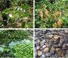 100%自然なGriffonia Seed Extract 5-Hydroxytryptophan 98% 5 Htp