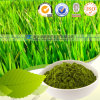 100% organisches Weizen-Gras-Puder