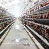 Exploração agrícola automática da gaiola da galinha para camadas e grelhas