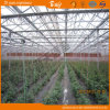 Longue Vie-Pan Venlo Type Glass Multi-Span Greenhouse pour Planting Vegetables&Fruits