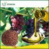 Aceite de semilla puro sano natural de la uva para el alimento sano
