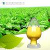 Coenzima Q10/Co Q10/coenzima de Ubidecarenone