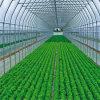 냉각 패드 시스템을%s 가진 최신 판매 PE 덮개 갱도 정원 온실