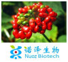 Polvere naturale 1%-80% Ginsenoside dell'estratto della radice del Ginseng del Panax