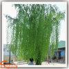 Artificial Green Willow Trees para decoração ao ar livre