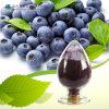 Polvo azul natural de la baya para la bebida sana de la fruta